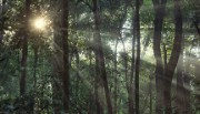 Sunlight shines through a rainforest